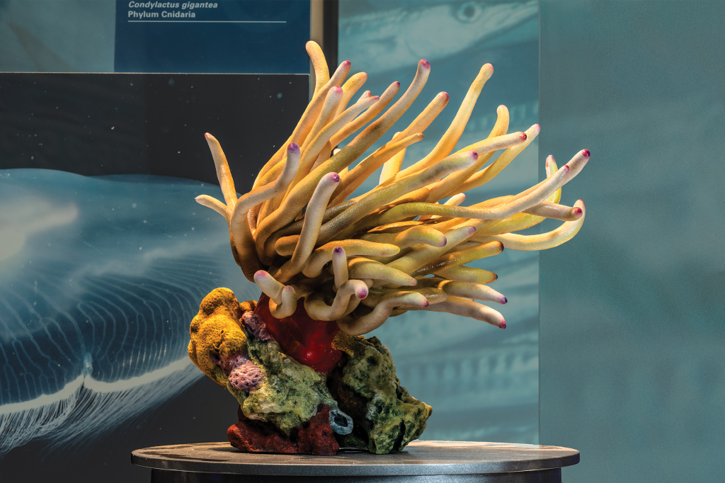 Final installed 3D model of a giant anemone on display