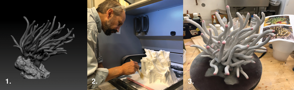 Giant Anemone, Condylactis gigantea 1. Final 3D digital sculpture, 2. 3D print being removed from the printer,  3. Finished model, partially painted.
