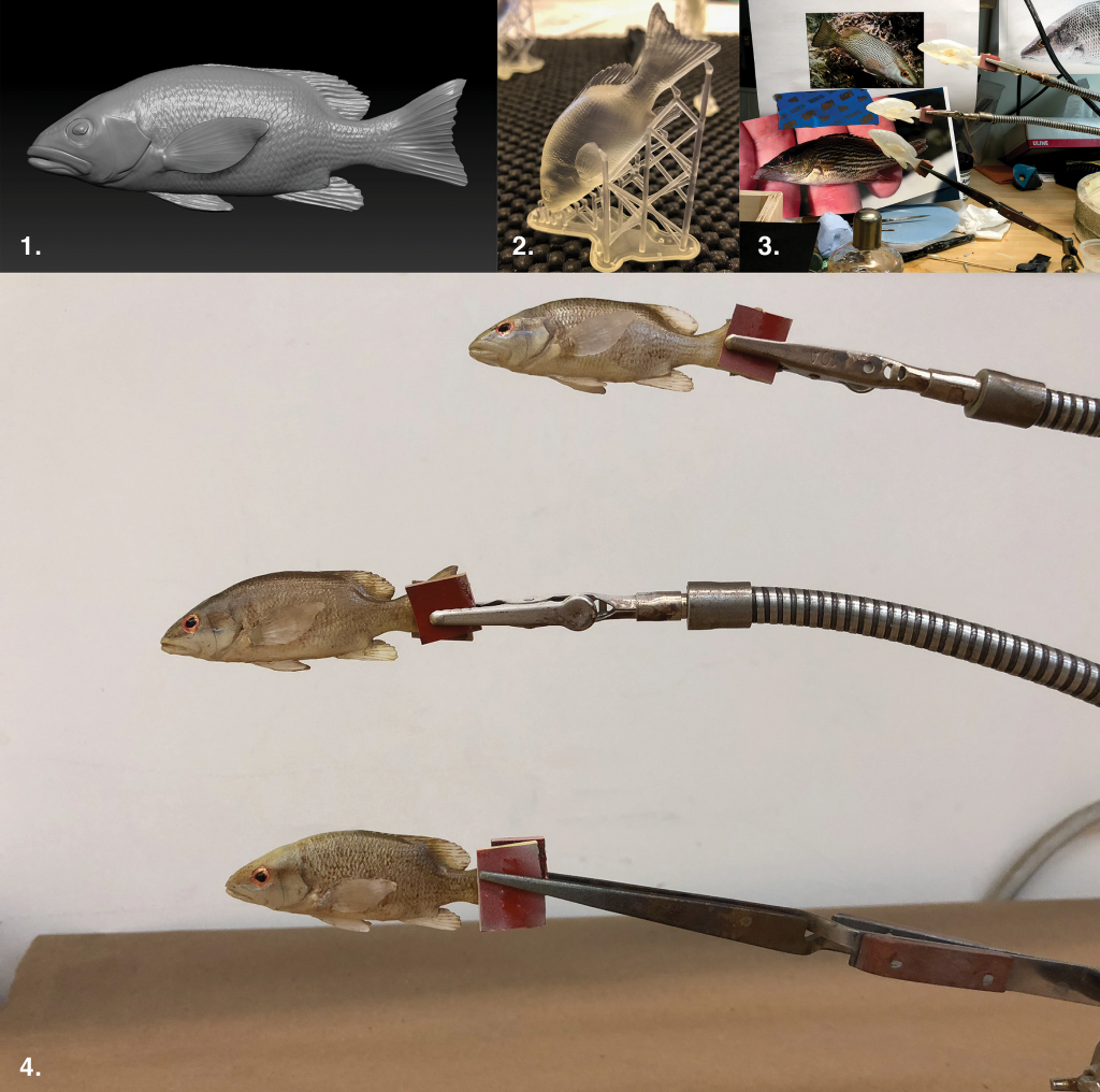 Juvenile Gray Snappers, Lutjanus griseus 1. Final 3D digital sculpture, 2. 3D print made with liquid resin, 3. Painting preparation,  4. Finished model, painted and ready for installation.