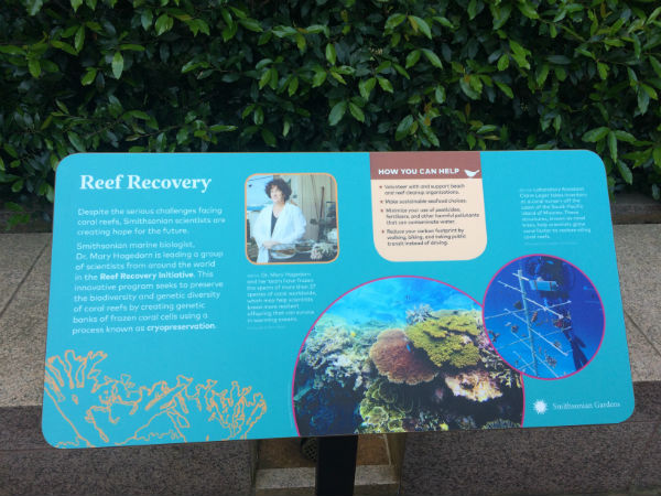 "A blue exhibit panel titled ""Reef Recovery"""