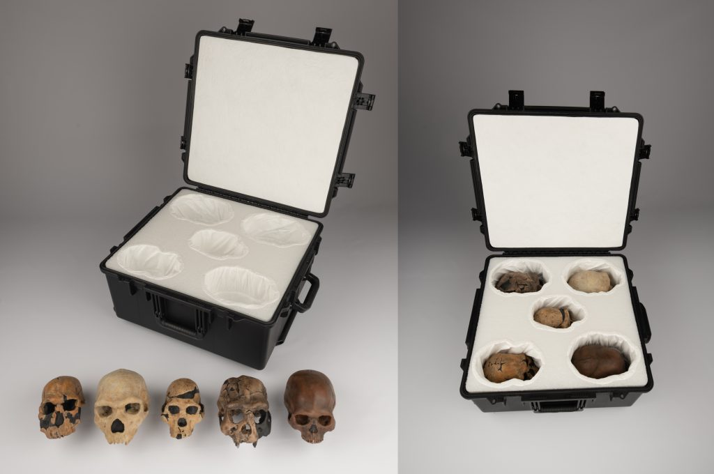 The 3-D skull casts will be part of the Human