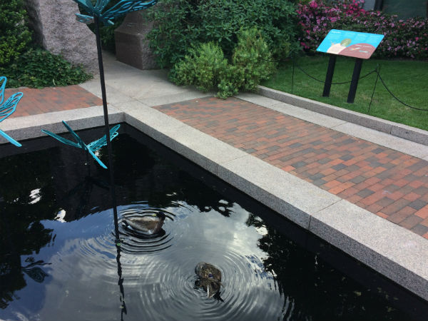 Two ducks swimming in a pond with an exhibit panel next to it