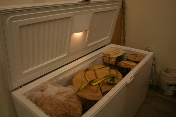 Pieces of wood sit in a large chest freezer.